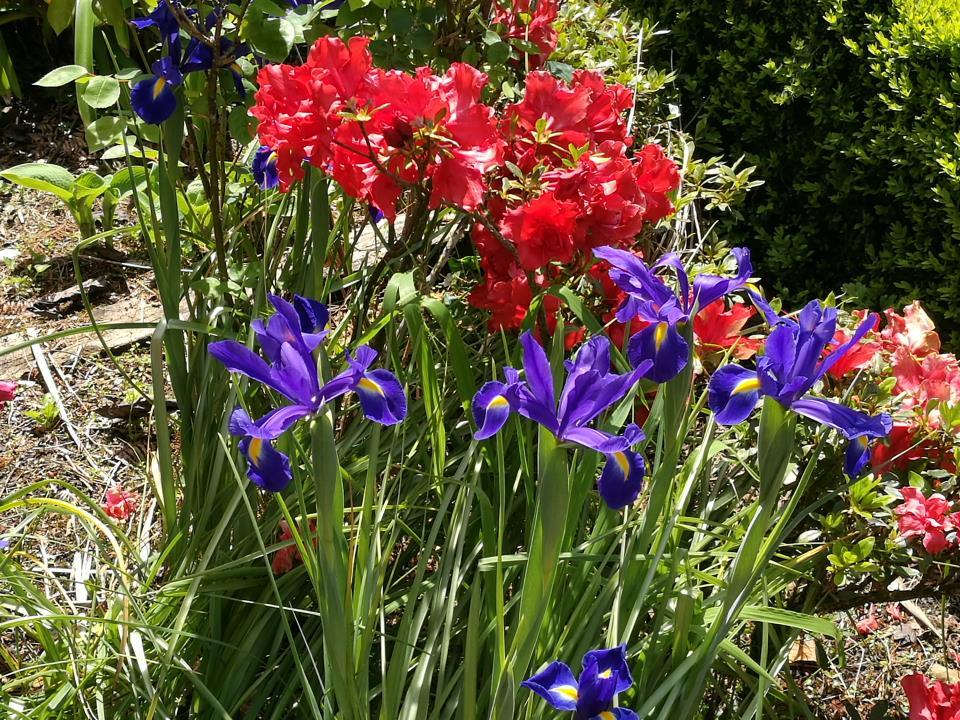 Beautiful flowers at Awatuna Homestead
